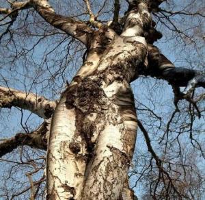 tree-goddess